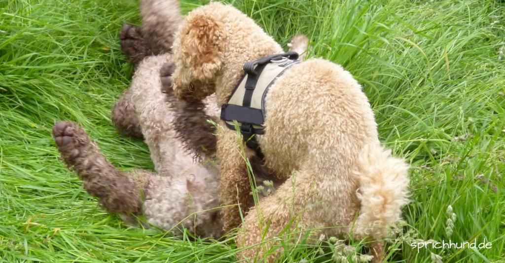 AufreitenRammeln! Warum tut Hund das? – Sprich Hund!