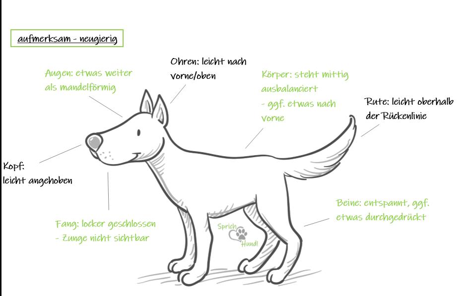 Körpersprache Hund
